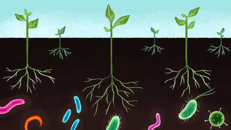 plants and microbes